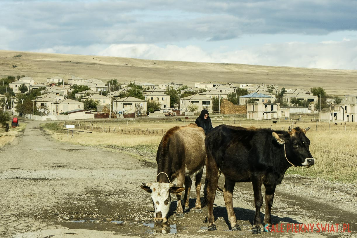Krowy na tle Udabno