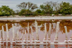 Salinas de Celestun w meksykuSalinas de Celestun w meksyku
