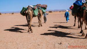 Nomadzi na Saharze