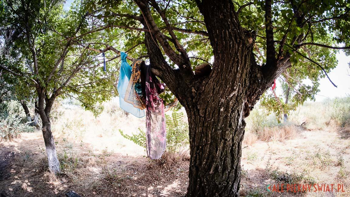 Kazachstan - cudowne drzewo przy grobowcu Gaukhar-ana