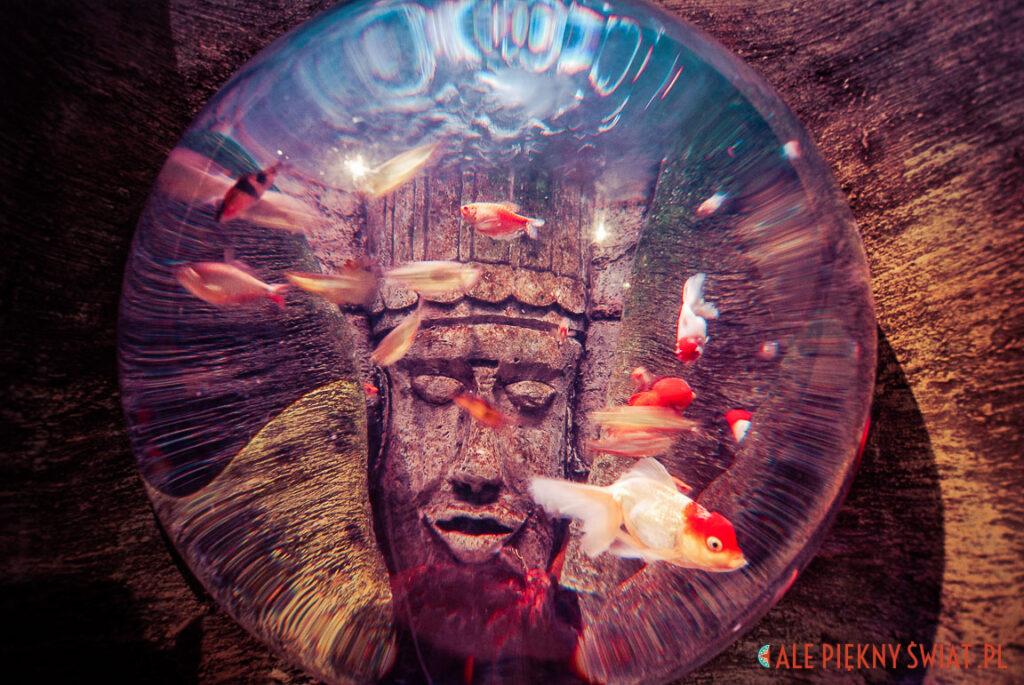 Akwarium z oceanarium w Dingle w Irlandii