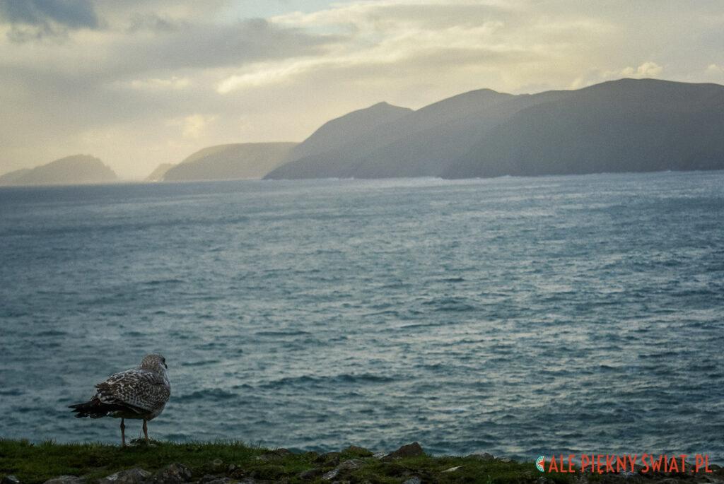 Wyspy Blaskett w Irlandii