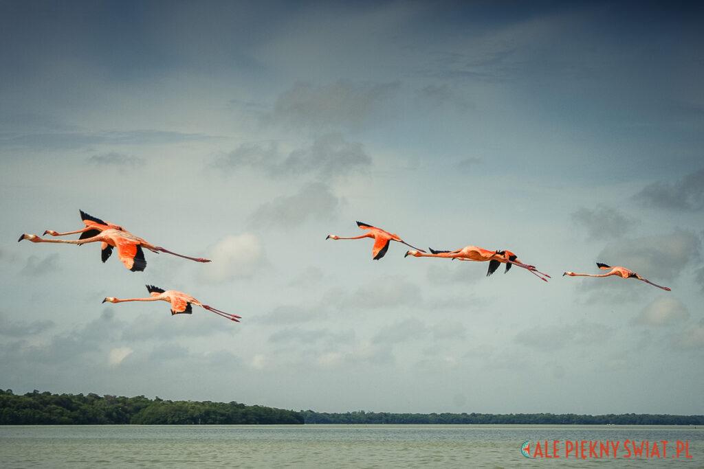 Atrakcje Jukatanu - rezerwat flamingów w Celestun