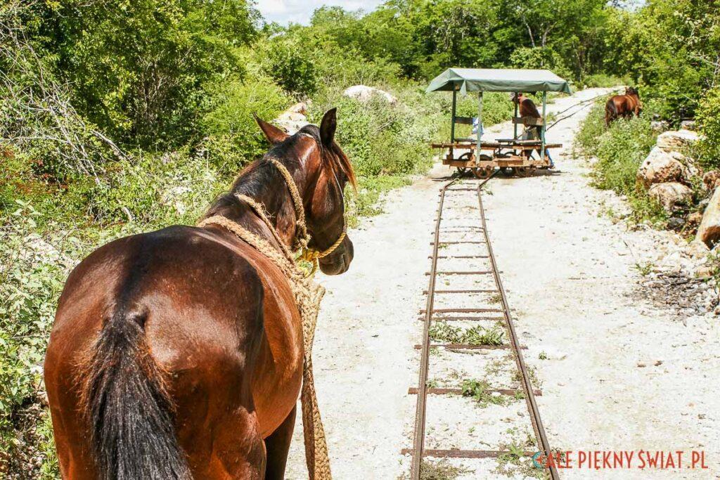 Atrakcje Jukatanu - Cuzama w meksyku